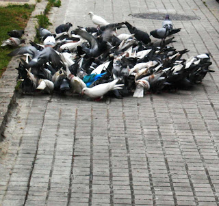 Assaig de manifestació