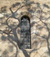 De la finestra a l'arbre