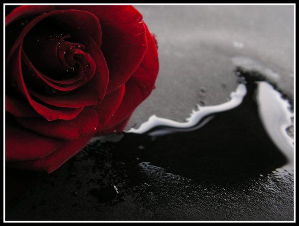 Imagenes Goticas De Rosas - Imágenes Góticas Facebook