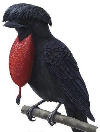 umbrella bird clipart