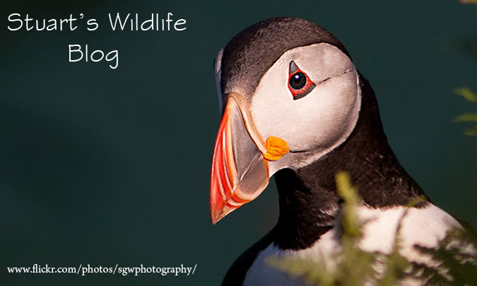 Stuart's Wildlife Blog
