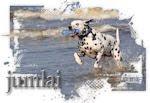 Dalmatier Jumbo en laika
