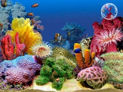 animated aquarium wallpaper. MLS fish tank wallpaper.