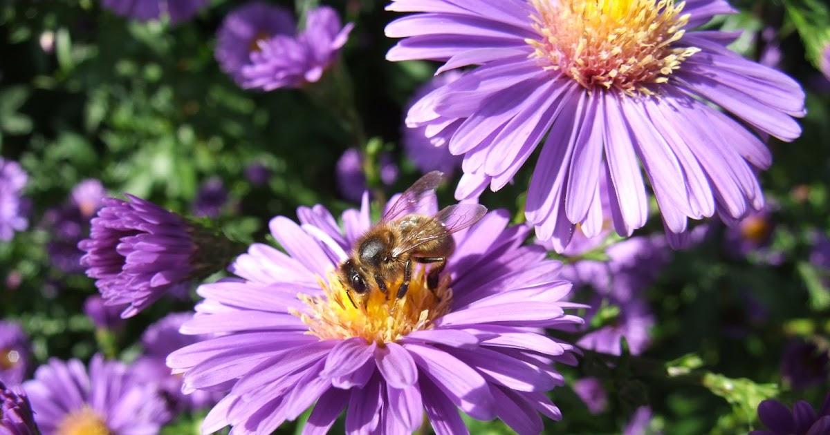 La biodiversit de mon jardin ou comment pr server et accueillir la biodiversit au jardin les - Comment eloigner les chats de mon jardin ...