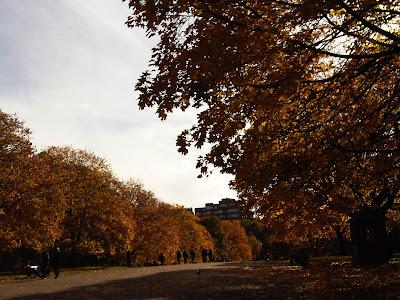 permandangan gambar musim luruh