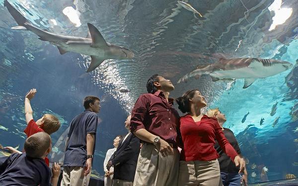 Nyt Bestselling Author Julie Kagawa Sharks And Signings
