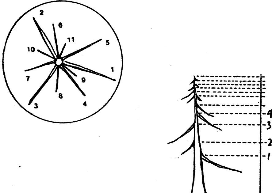 teknik wiring bonsai example electrical wiring diagram u2022 rh huntervalleyhotels co Bonsai Copper Wire Bonsai Wiring Techniques