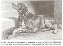 Σουλιωτικός Σκύλος : Ενας προγονος του Μολοσσου