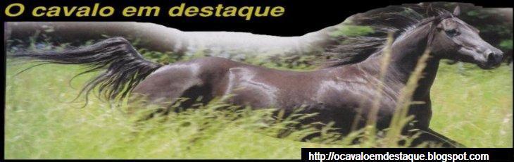 O Cavalo em Destaque