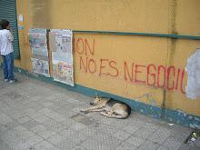 La Educación es un perro en la calle