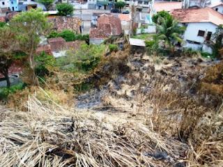 Queimadas nas Encostas de Ilhéus é um Painel do Fórum Ambiental do Sul da Bahia