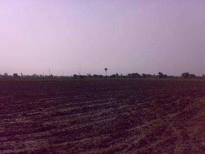 Lonely, Jungle, Brunt, Land, Tree