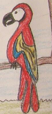 desenho de um papagaio
