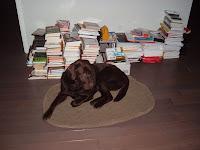 Books Im Reading