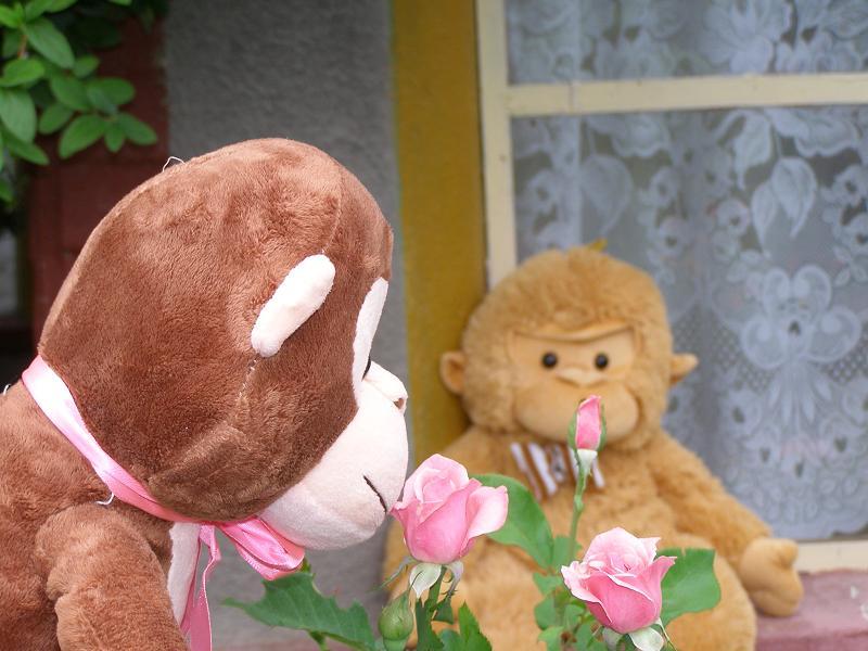 [trandafirii+infloriti.jpg]