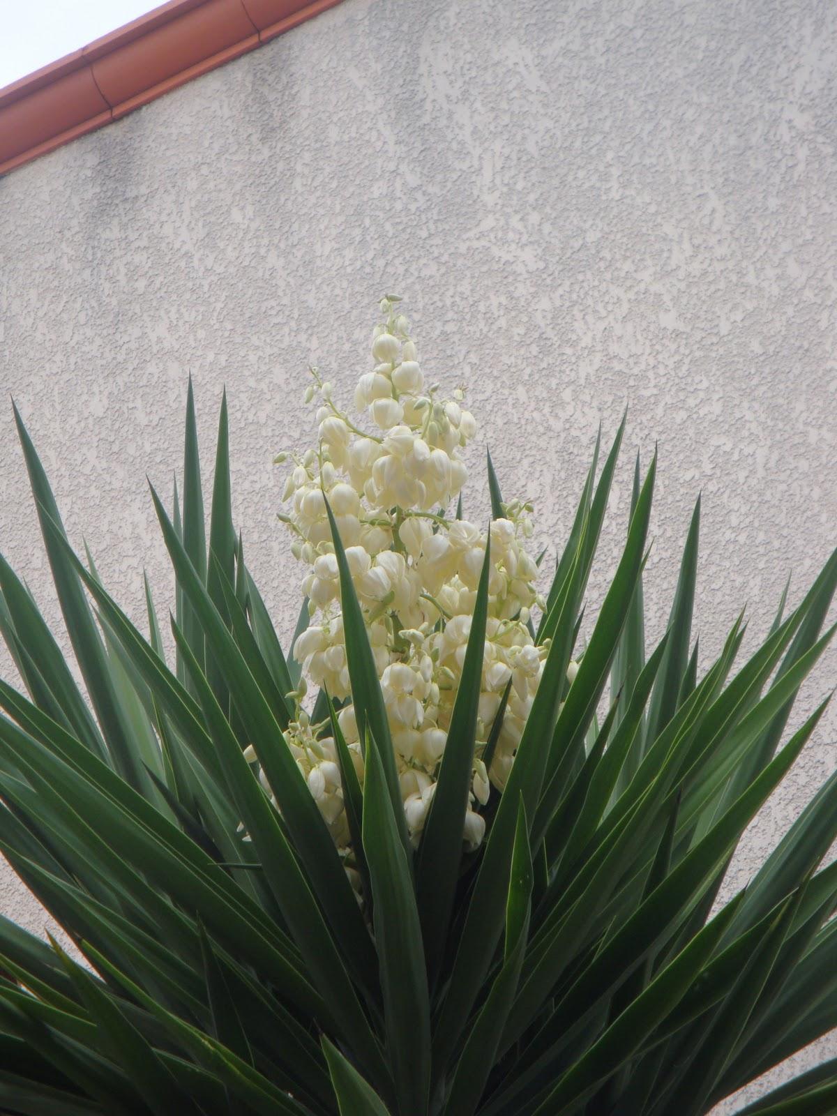 Lo c fossard yuka for Plante yuka ikea