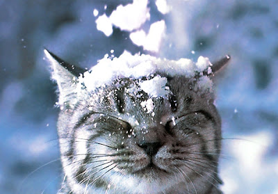 Cats in the Snow Seen On www.coolpicturegallery.us
