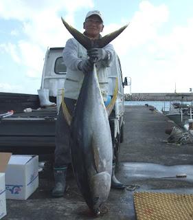 久米島マグロ釣り紀行