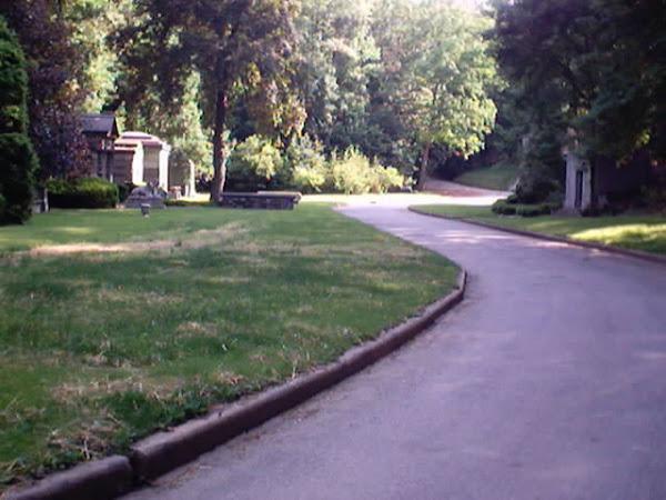 Cypress Drive
