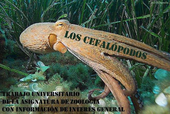 Los cefalópodos