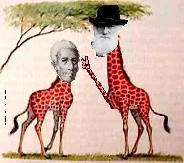 external image Lamarck+vs+Darwin+2+BioTay.JPG