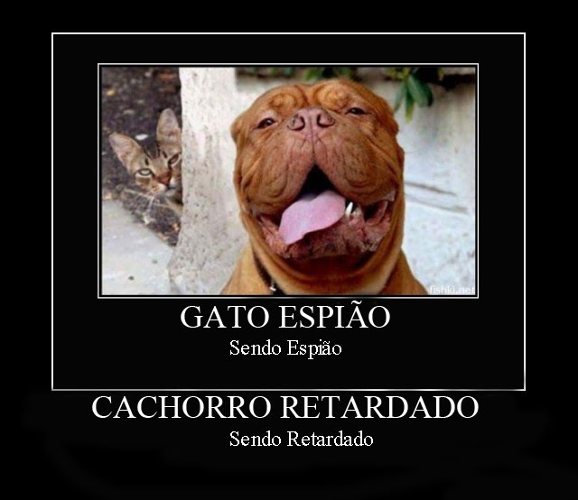 http://3.bp.blogspot.com/_Fje2Q1Rg0x4/TGhe8-YJS1I/AAAAAAAAACw/KGCJ-sovPjk/s1600/retarded-dog-dog-cat-spy-retarded-demotivational-poster-1217027003.jpg