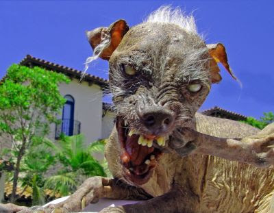 Funny Things Ugly-dog-pic