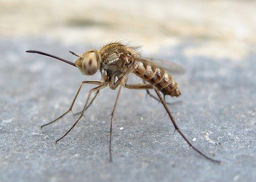 [masquito.htm]