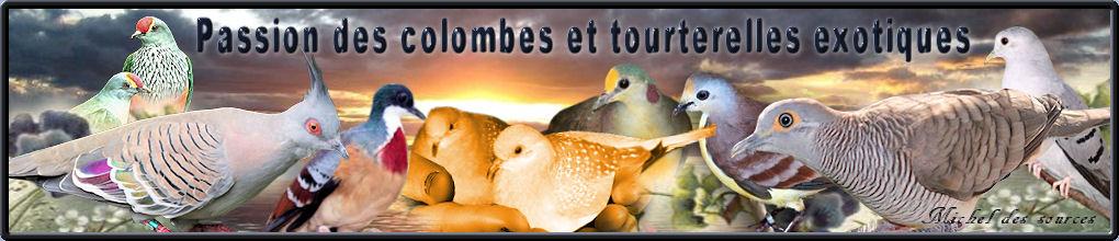 Passion des colombes et tourterelles exotiques