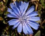 Allergia stagionale e fiori di bach