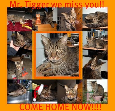 [000Mr.+Tigger+COME+HOME!!.jpg]