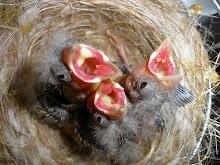 Algumas fotos das minhas aves em plena criação!!