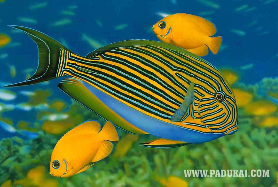 Beautiful Birds Fish Animals
