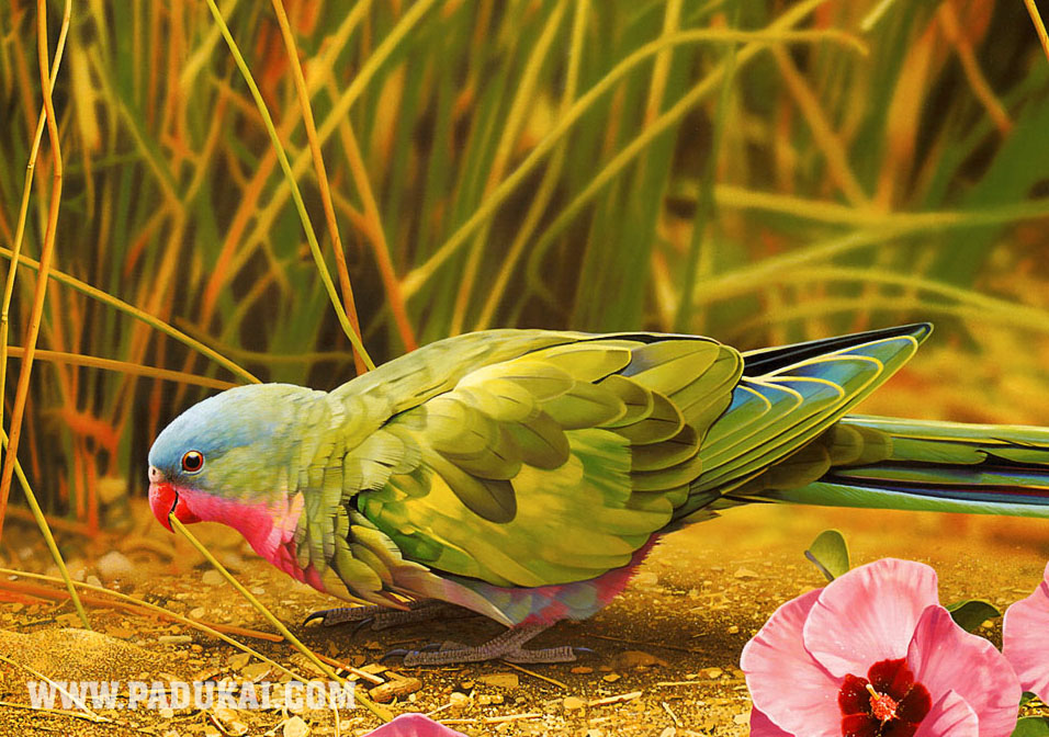 Beautiful Birds Fish Animals Photography Colorful Photos Colourful Stills Cute Little