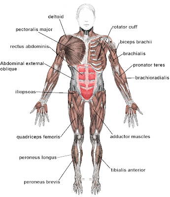 human+body+parts+diagram