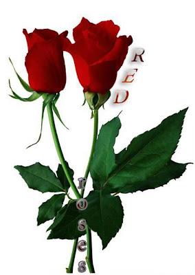 Pair of romantic bangalore red rose pics