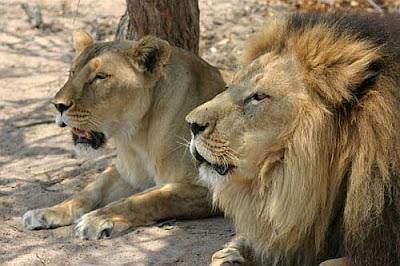 Jodi Lion photos
