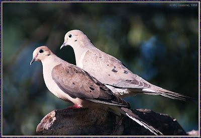 Pair and funny birds image