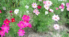 Wedding Cosmos