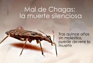 La enfermedad de Chagas la transmite una chinche