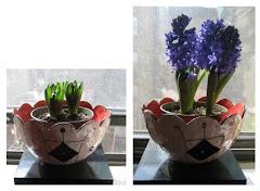 Ali's hyacinth
