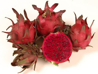 teknik budidaya buah naga dragon fruit