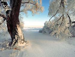 llegó el invierno