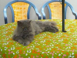 Nikita, a senhora da casa