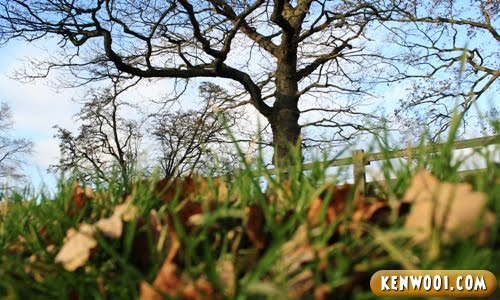 harewood leeds tree