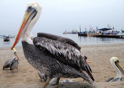 Razne ptice P6250163