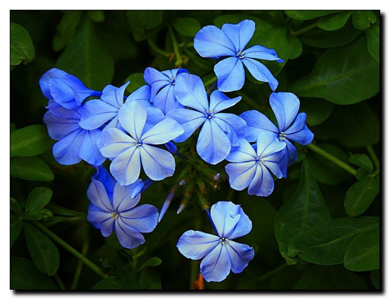 world of my own blue jasmine my namesake. Black Bedroom Furniture Sets. Home Design Ideas