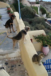 Santorini animals