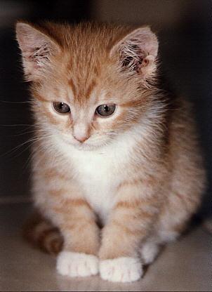 Foto Gambar Kucing Blog Michael Yani