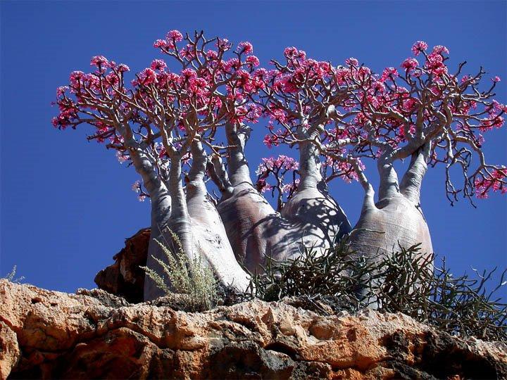 Socotra Island 15